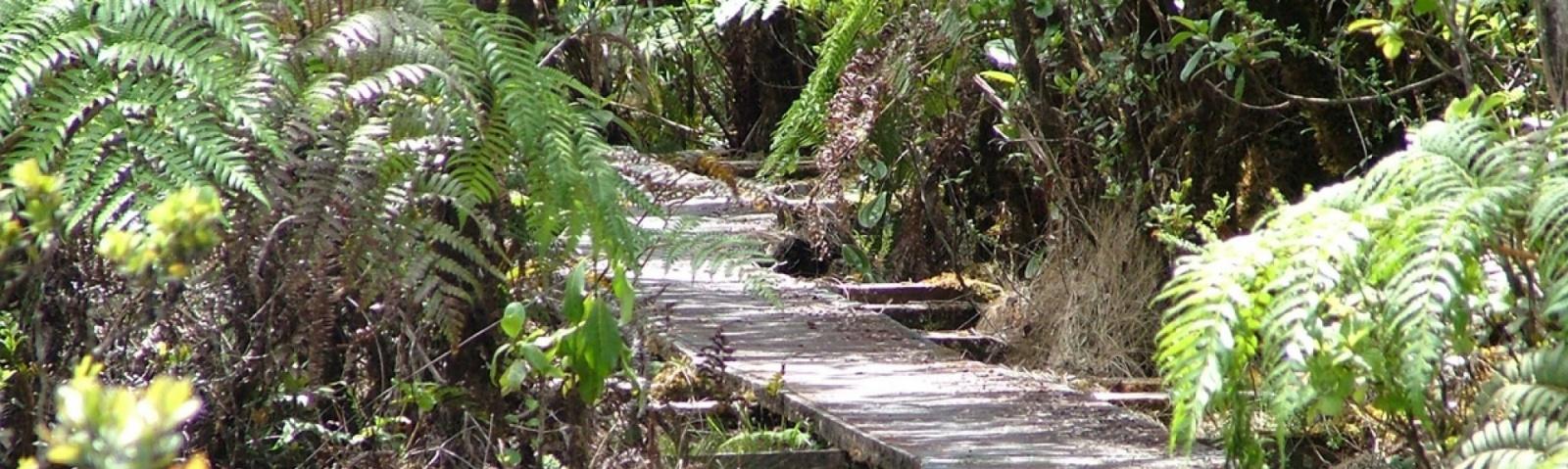 Alakai Swamp Trail | Kauai Hawaii