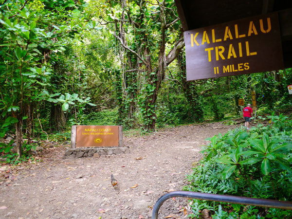 How To Prepare for the Kalalau Trail Image