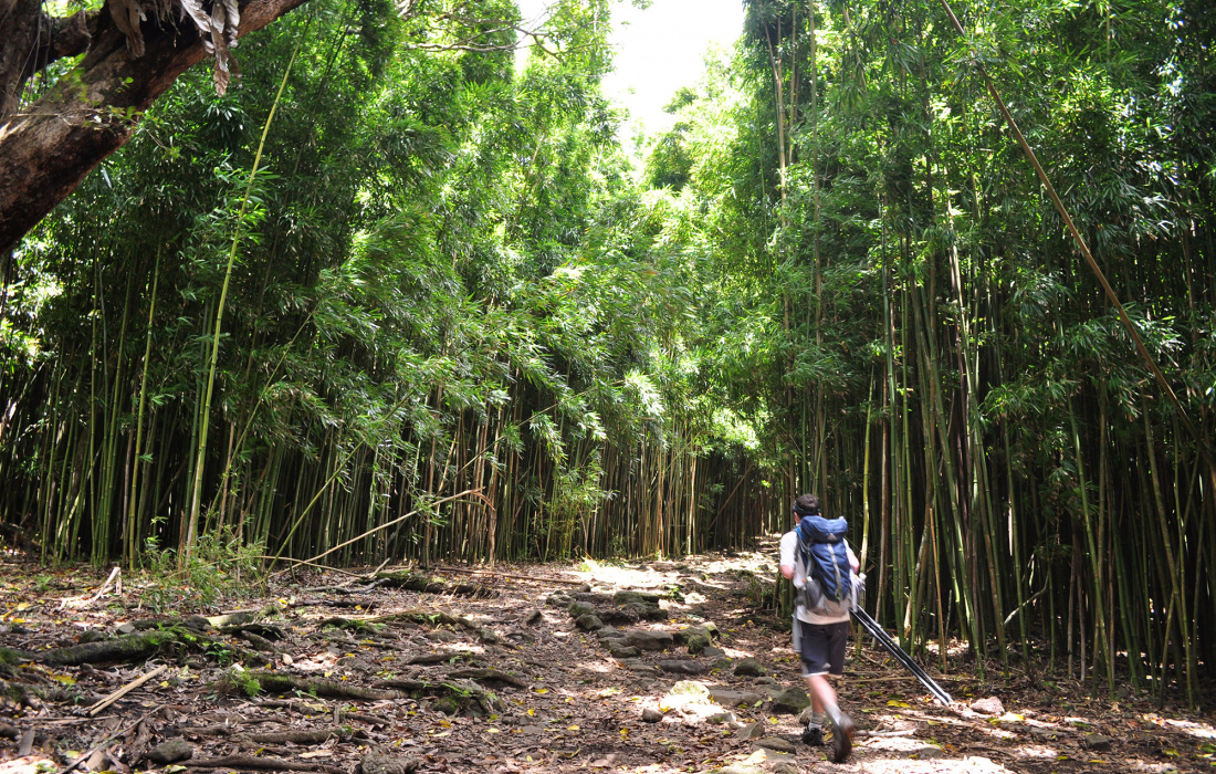 Maui Hiking Trails