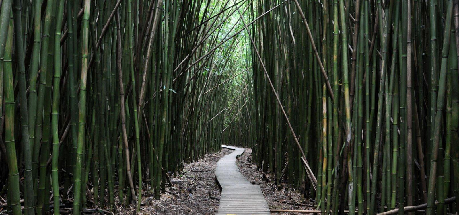 Pipiwai Trail Maui Hawaii