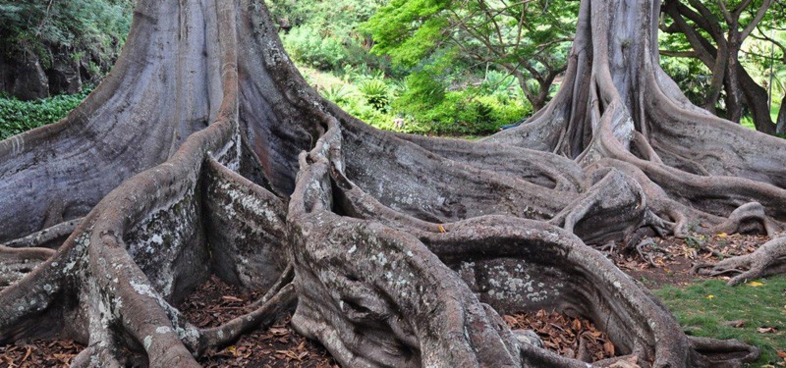 National Tropical Botanical Garden Photo Gallery