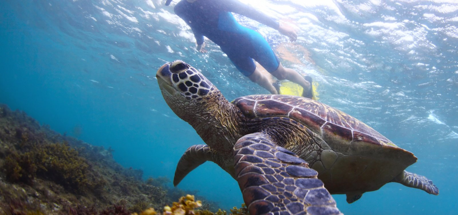 Turtle Town Maui- the best place to see Honu- Hawaiian Green Sea Turtles
