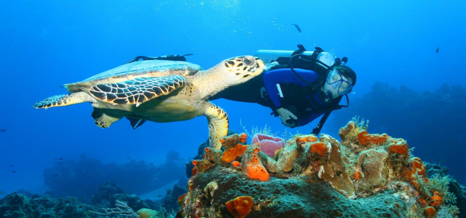 Olowalu Turtle Reef   Maui Hawaii