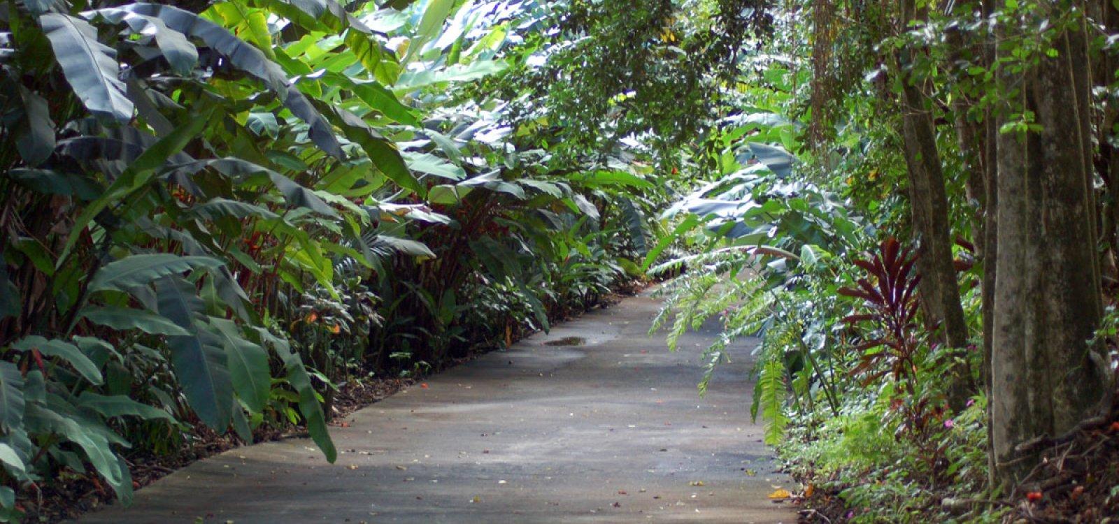 World Botanical Gardens Big Island Of Hawaii