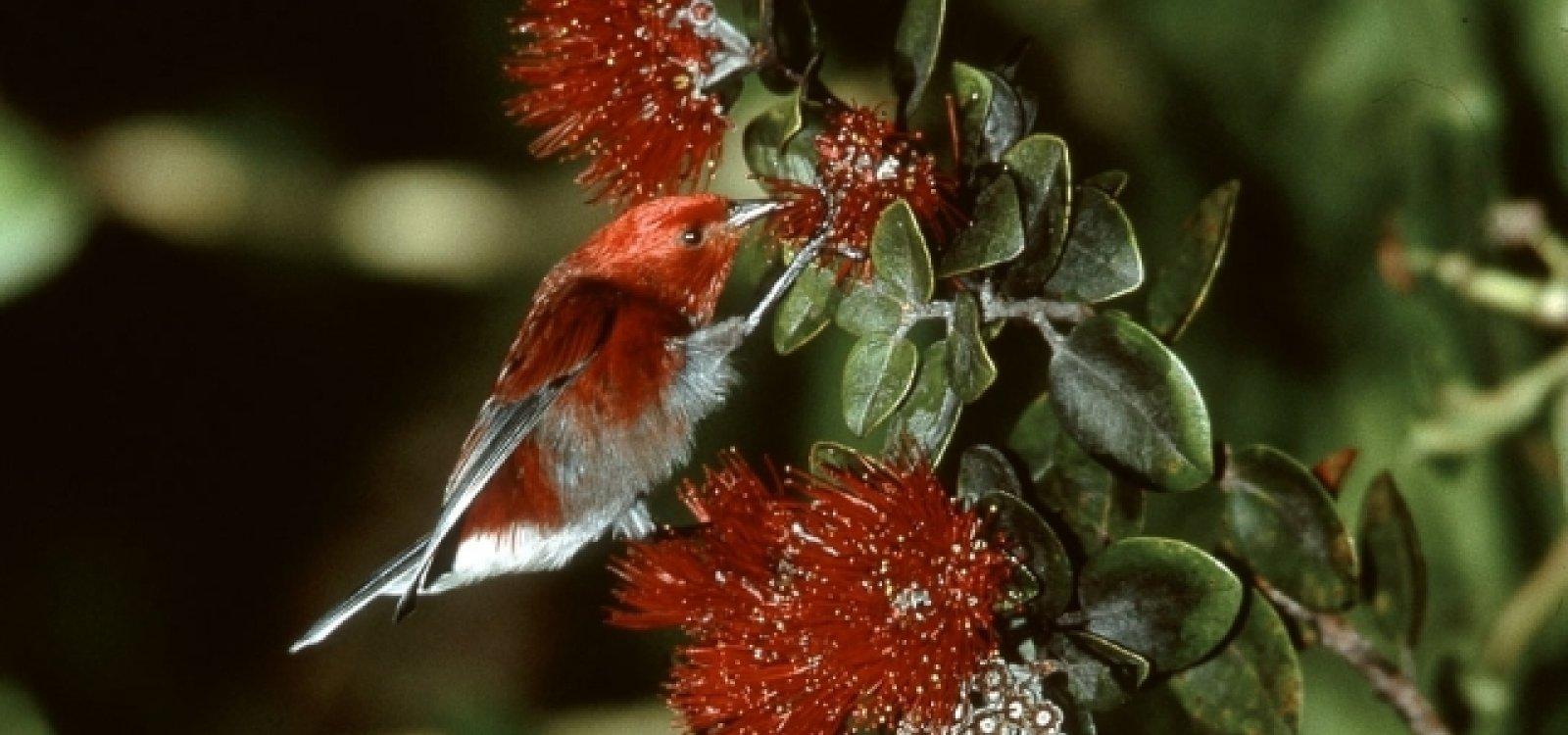 Hawaii Birding Tours Big Island