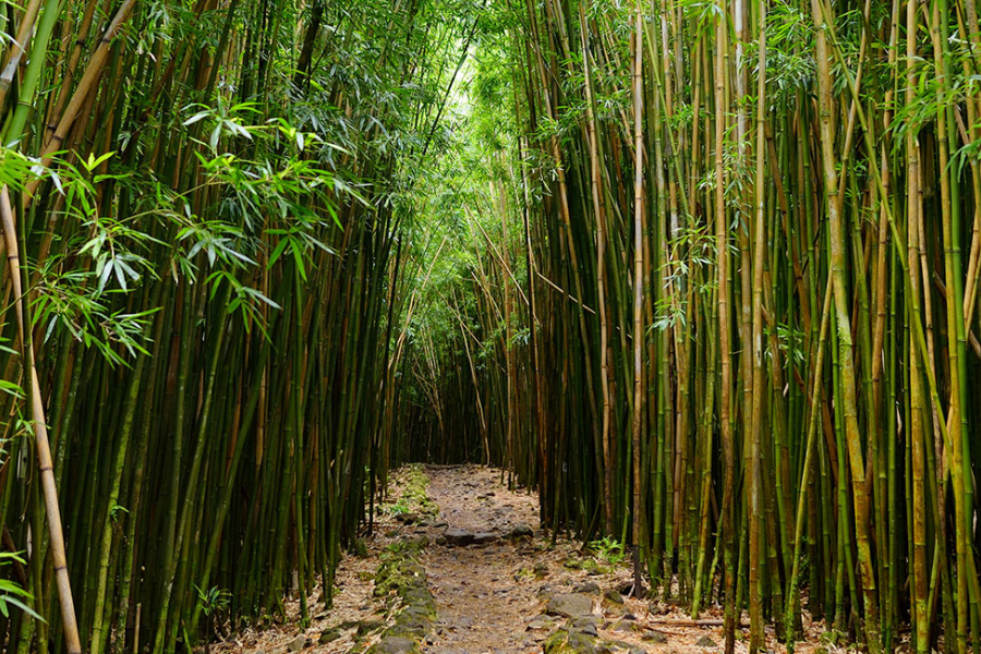 Hana Highway Hiking Trails Guide Image