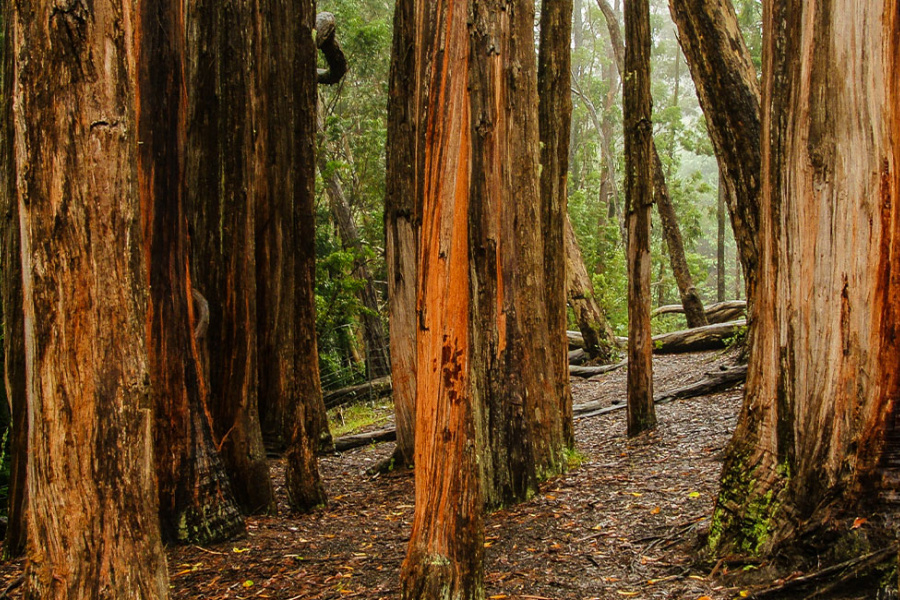 Hosmer Grove Loop Trail Image