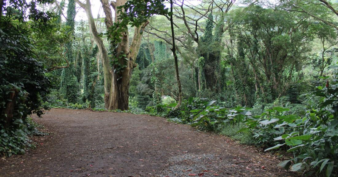 Follow the lovely path to Manoa Falls