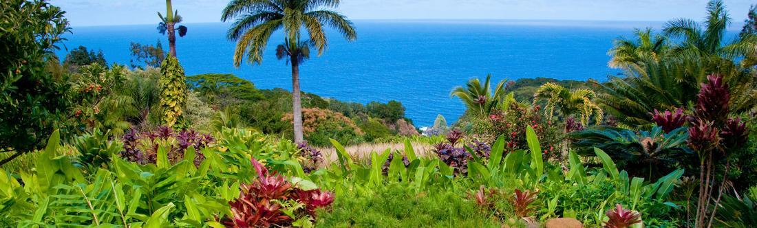 Hawaii Gardens