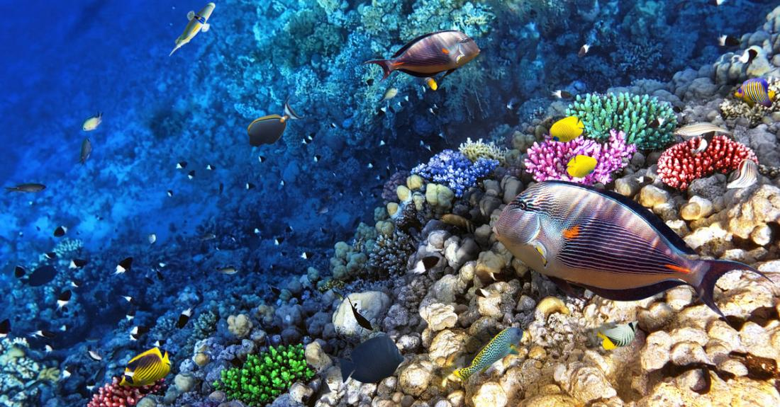 The great diversity of marine life at the Waikiki Aquarium